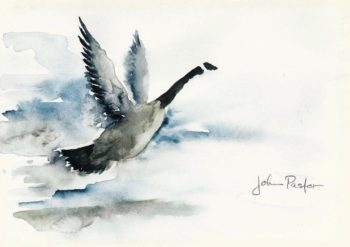 Canada Goose Watercolor on Canson cold-pressed paper